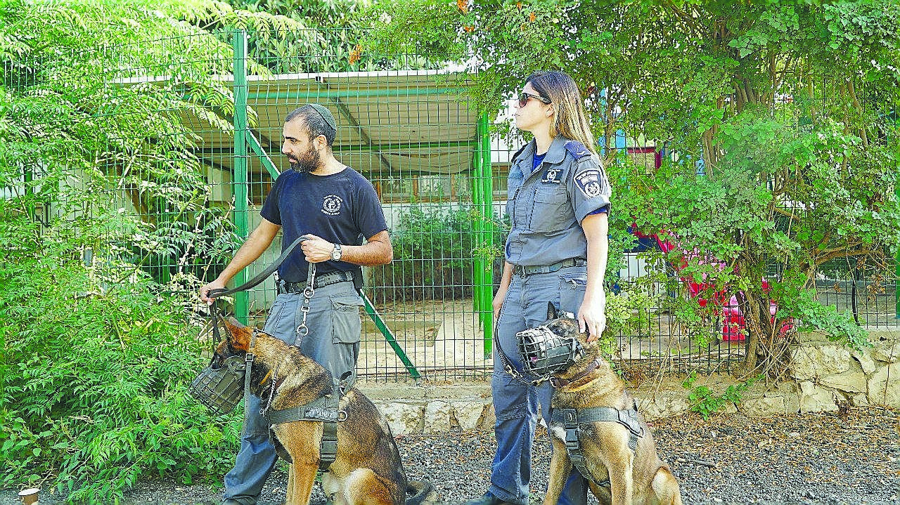 מבצע כנגד יעדי פשיעה ברחובות (צילום: משטרת ישראל)