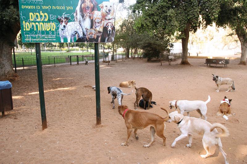 גינת כלבים (צילום אילוסטרציה: דודו בכר)