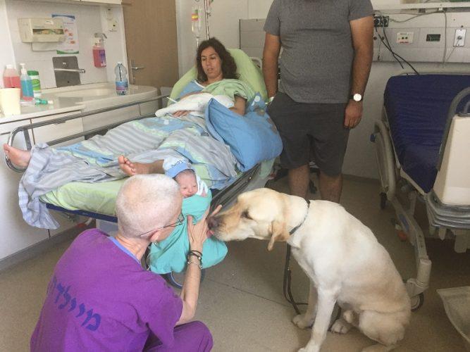 המפגש בין התינוק וכלב הנחיה דקות לאחר הלידה (צילום:אפרת שררה ואופיר לוי, בית החולים קפלן)