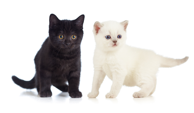 """חתולים (צילום: יח""""צ)"""
