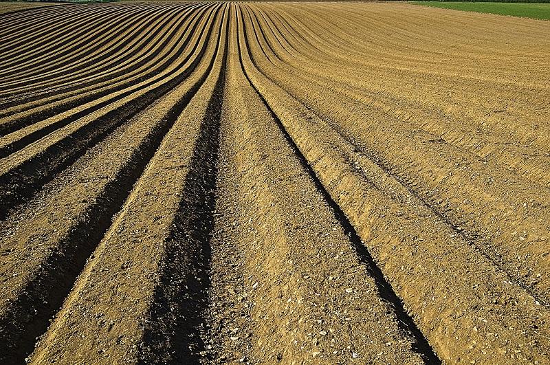 דשן בשדה חקלאי