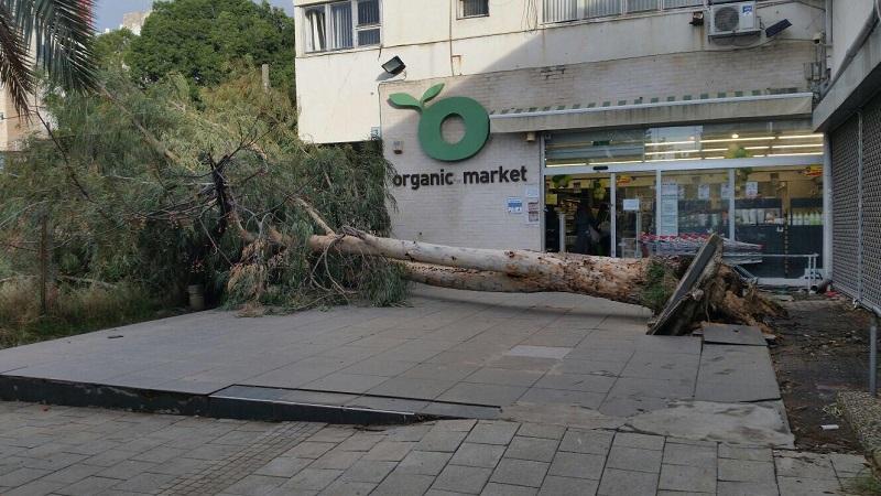 קריסת העץ ברחוב יעקב