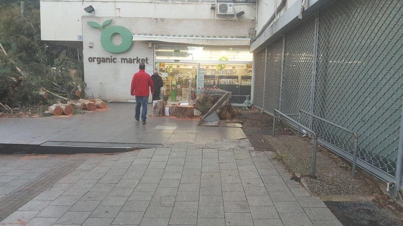 העץ שקרס ברחוב יעקב לאחר שנגזם