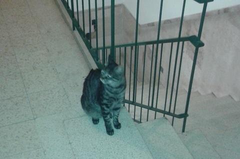 חתול בחדר המדרגות