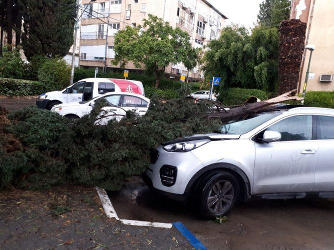 העץ שקרס ברחוב י.ל פרץ