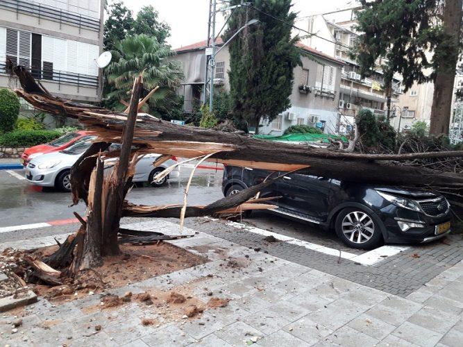עץ שקרס על רכב ברחוב אחד העם