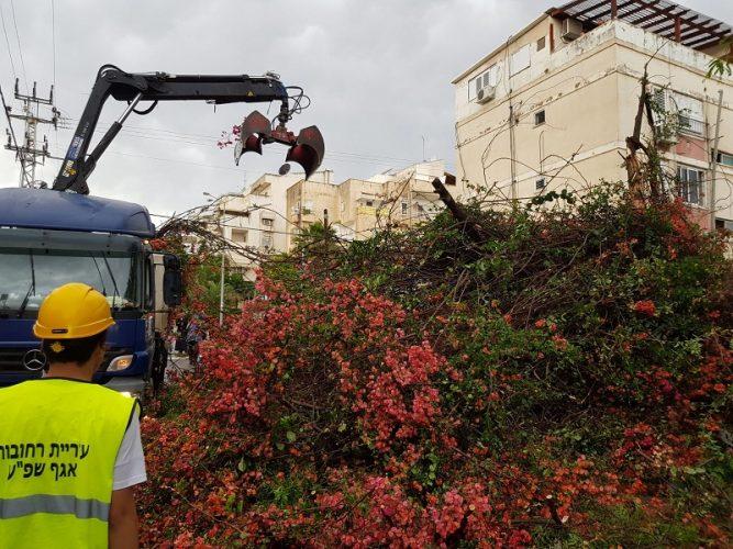 טיפול העירייה בפינוי עץ פרטי שקרס ברחוב ההסתדרות