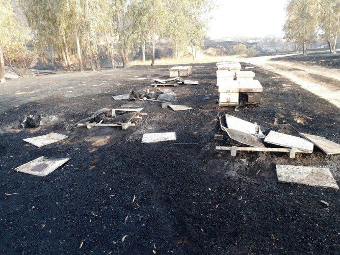 שריפת כוורות בעוטף עזה עקב ההצתות (צילום: מועצת הדבש)