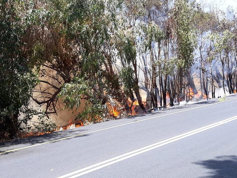 השריפה בכביש 4233 (צילום: רותי ורד)