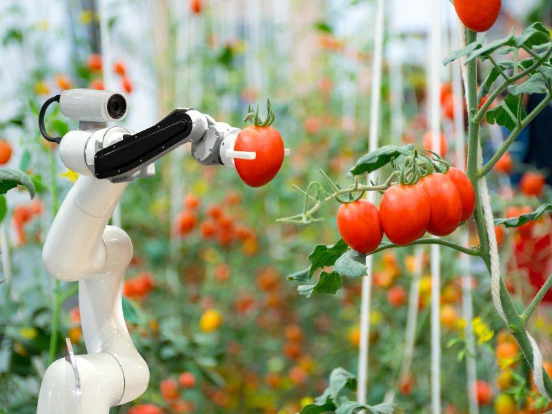 הוראת מדעי הטבע במכללת אחוה (מאגר תמונות Shutterstock)