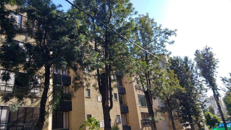 עצים ברחוב יעבץ