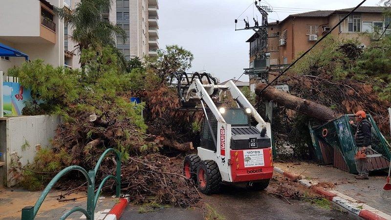 צוות אגף גנים מפנה עץ שנפל בשל מזג האוויר