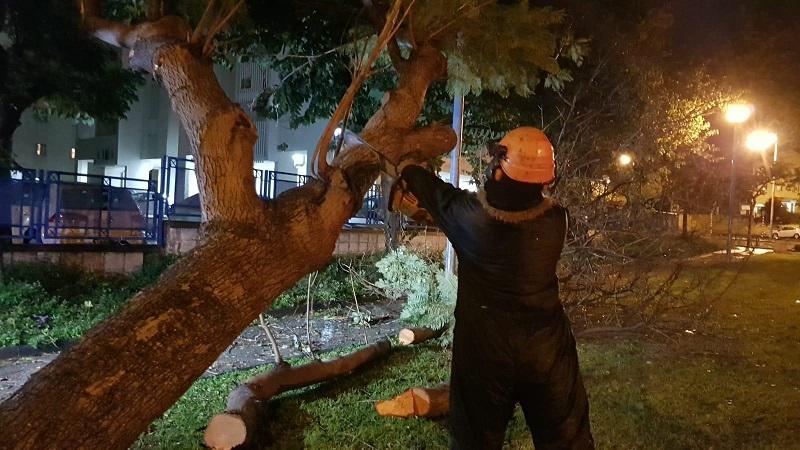 גיזום עץ שנפל במהלך הסופה ברחובות