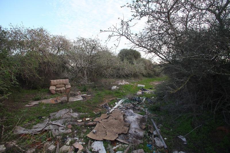 עצי שיטה מלבינה על רקע פסולת שהושלכה במקום