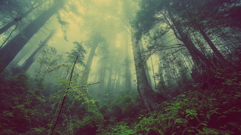 יער (צילום אילוסטרציה)