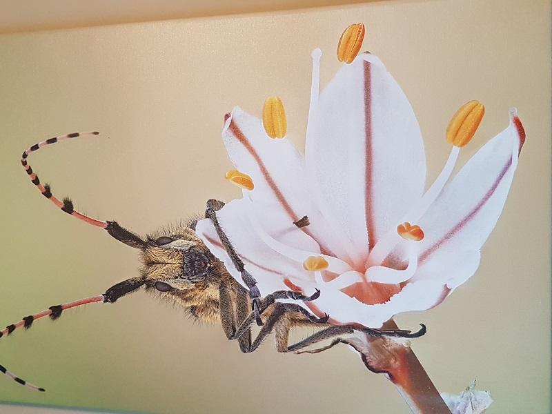 """מתוך תערוכת """"פרחים הם לפעמים"""" (צילום: מירון קרלינסקי)"""
