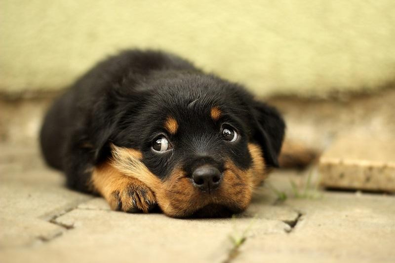 גור כלבים (צילום אילוסטרציה)