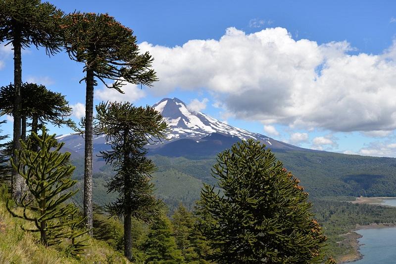 שמורת קונגיגיו בצ'ילה