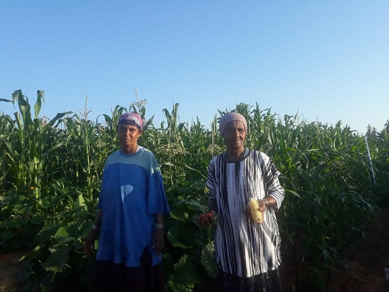 תושבים משכונת קרית משה בחלקות שהוקצו עבורם בפקולטה לחקלאות