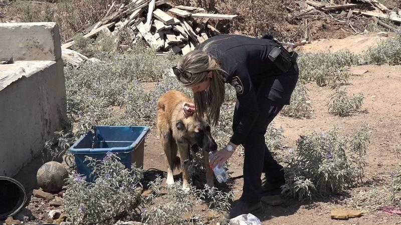פעילות אכיפה משולבת ברחובות כנגד הטמנה לא חוקית של פסולת בניין והחזקת בעלי חיים בתנאים קשים