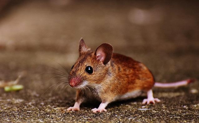 עכבר צילום אילוסטרציה