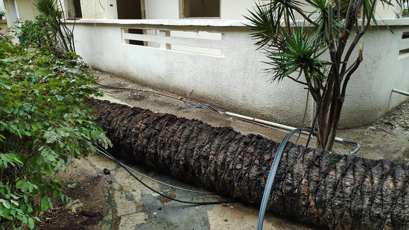 קריסת עץ ברחוב מנוחה ונחלה (צילום: חברת החשמל)