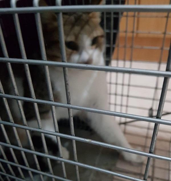 החתול לאחר החילוץ