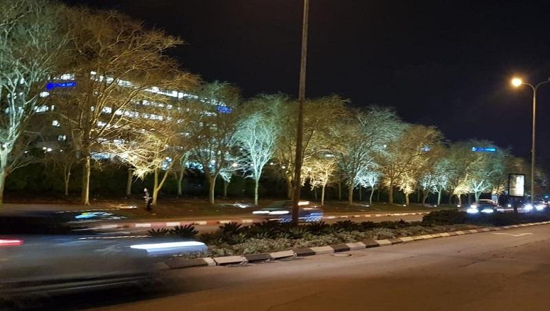 עצים מוארים ברחובות