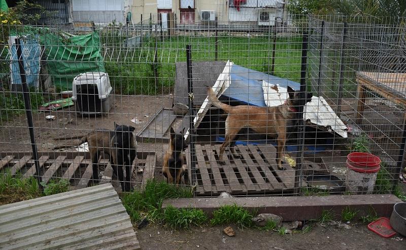 כלבים מוזנחים נמצאו בכלוב בקרית משה ברחובות (צילום: דוברות המשטרה)