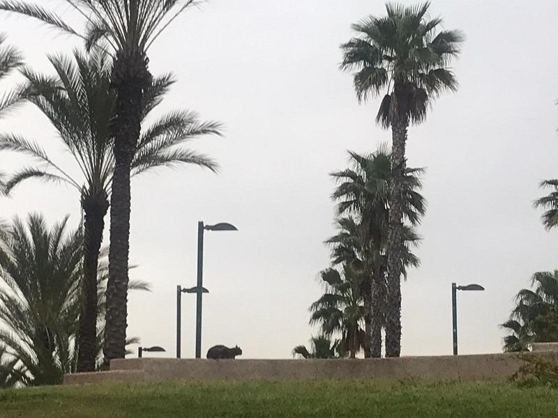 פארק מיותם ברחובות בימי ההסגר