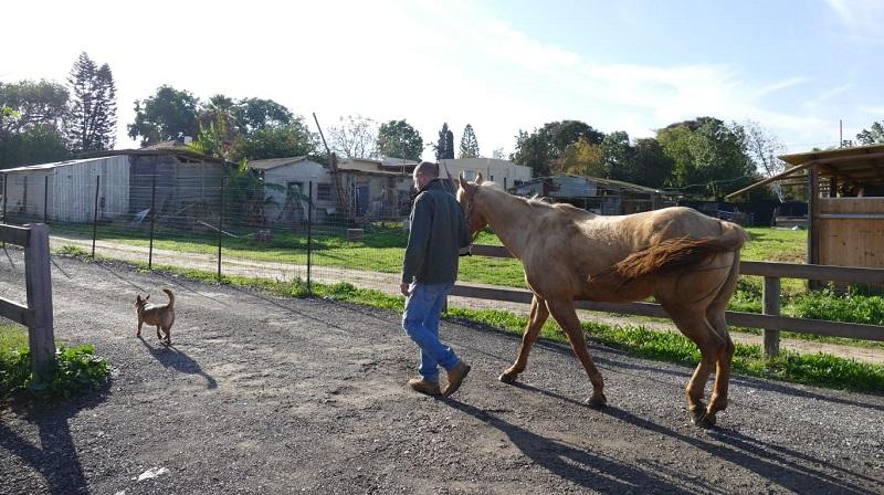 דני סיטרין בחוות הסוסים