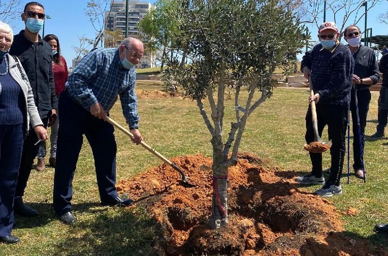 נטיעת עצי הזית בפארק גבעת האהבה