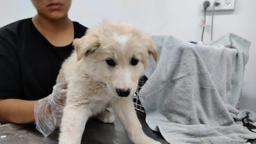 גורי הכלבים במהלך הטיפול בכלבייה העירונית